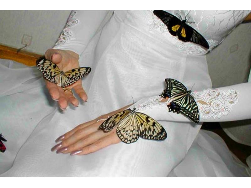 Салют з 10 метеликів