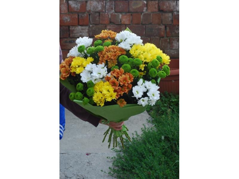 19 різнокольорових хризантем