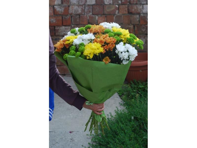19 разноцветных хризантем