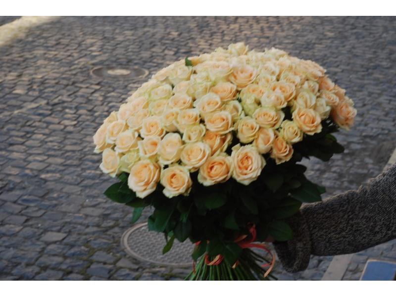 101 cream rose