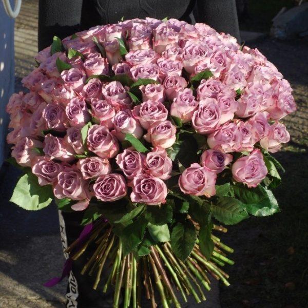 101 бузкова троянда