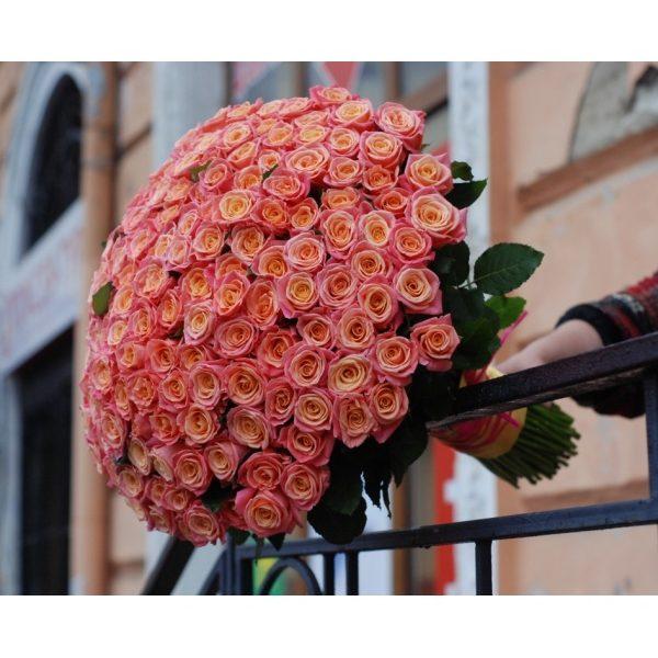 151 троянда