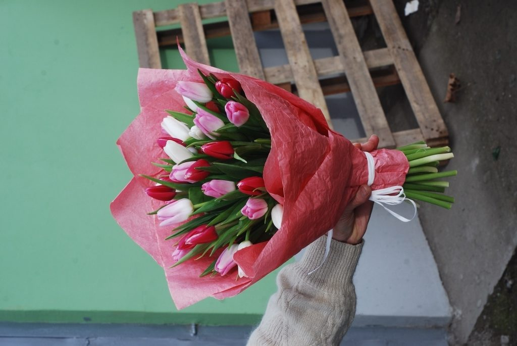 31 біло-рожевий тюльпан