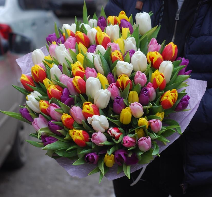 101 різнокольоровий тюльпан